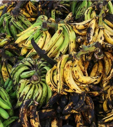 16-year-old has finally succeeded in making plastic out of banana peels | Food & Water Security, Sustainable Farming, Community Kitchens | Scoop.it