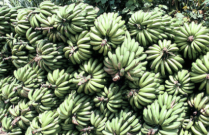 Bananas and bottlenecks: Piloting regional value chain cooperation ... | Impact Investing and Inclusive Business | Scoop.it
