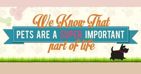 Visualistan: We Know That Pets Are A Super Important Part Of Life [Infographic] | Latest Infographics | Scoop.it