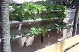 Cultivos acuapónicos: un sistema de producción de vegetales y animales acuáticos | EROSKI CONSUMER | Cultivos Hidropónicos | Scoop.it