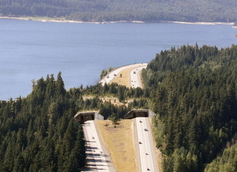 Bridges For Animals - Wildlife Overpasses | Share Some Love Today | Scoop.it