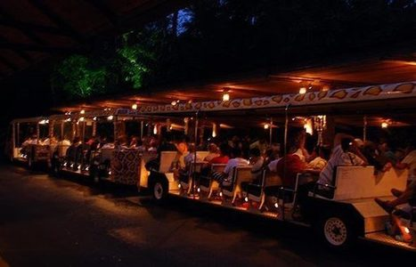 Singapore Night Safari: Hunt the night hunters in a blackened forest | Travel Junkie | Scoop.it