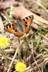 La natura di aprile | Mondo Trekking | Scoop.it