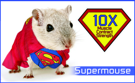 Duke biomedical engineers implant advanced muscle in mice - Duke Chronicle   Electrical Engineering   Scoop.it