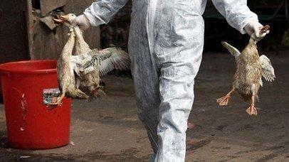 Grippe H7N9 : Un patient sur trois décède | Autres Vérités | Scoop.it