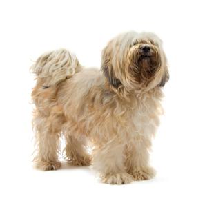 Best Flea Treatment for Dogs | Best Flea Treatment for Dogs | Scoop.it