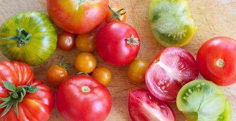 États-Unis : Lutter contre l'obésité en cultivant à l'école - meltyFood | éducation alimentaire | Scoop.it