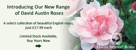 Great offers on RHS Hedging Plants, Bare Root Hedging, Instant Hedging from Hedge Nursery | horitculture | Scoop.it