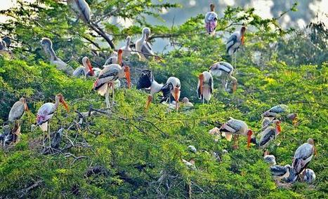 Bird conservation plan envisages role for NGOs, citizen groups | Conservation | Scoop.it