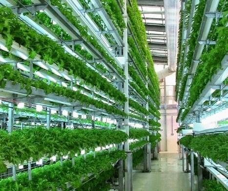 Veggie Factory - Première ferme verticale gérée par des robots | Actualités & Tendances | Scoop.it