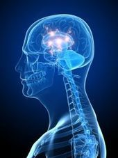 Brain Chemical Genes Influence Sensitivity to Reward, Punishment - PsychCentral.com | Social Neuroscience Advances | Scoop.it