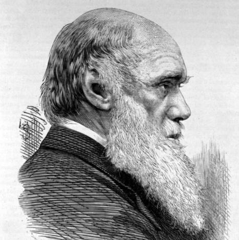 Darwin contre le mensonge créationniste   Aux origines   Scoop.it