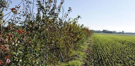 Agroécologie : Greenpeace lance une plateforme européenne d'échange   Autour de l'agroécologie...   Scoop.it