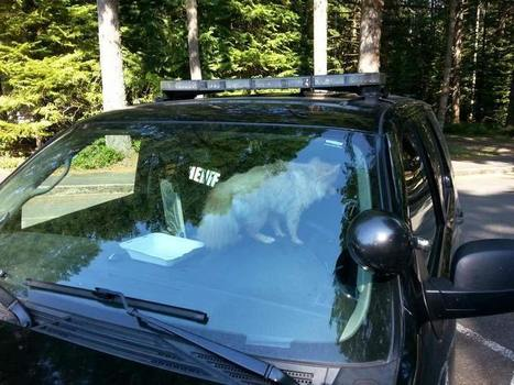 Deputies: Dog locked in hot car rescued while owner was on hike - WFSB 3 ... - WFSB | Dog News | Scoop.it