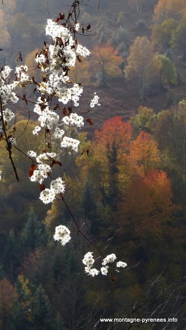 Les feux de l'automne en Aure - Montagne Pyrénées | Vallée d'Aure - Pyrénées | Scoop.it