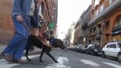 Accès aux lieux publics : au moins une difficulté par semaine pour un aveugle avec son chien - France 3 Midi-Pyrénées | CaniCatNews-actualité | Scoop.it