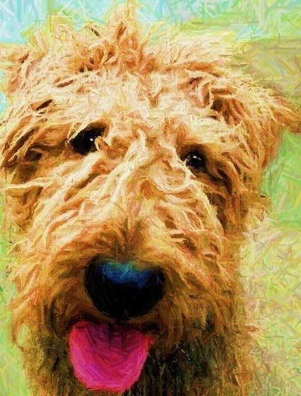 Blonde Ambition | Airedale Terriers | Scoop.it