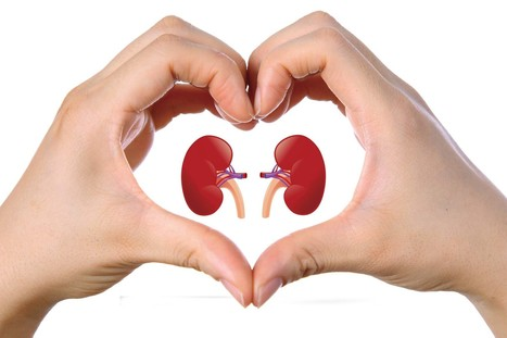 Saying No To Kidney Problems With Ayurvedic Medicine | Herbal Products | Scoop.it