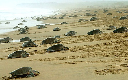 Mexico Takes Sea Turtles Seriously, Deploys Drones To Protect Eggs From Poachers | Drones | Scoop.it