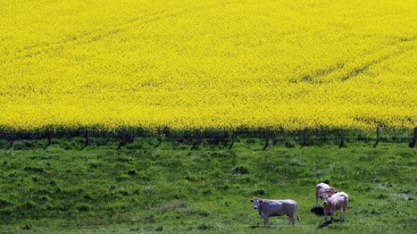 [Voir ou Revoir ] 13h15 le dimanche. Soigneurs de terres | la presse AGRIcole | Scoop.it