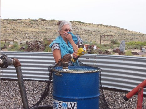 Study finds toxic #chemicals in people living near a #Pavilion, #Wyoming gas site | Messenger for mother Earth | Scoop.it