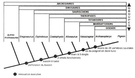 Retour sur la fin des dinosaures, la limite Crétacé-Tertiaire et les datations « absolues »   Aux origines   Scoop.it
