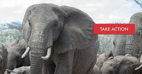 Petition: Shut down the ivory trade worldwide | Our Evolving Earth | Scoop.it