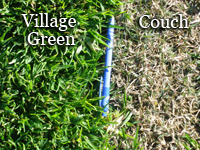 Get The High Quality Village Green Turf By The Licensed Growers In Australia | Lawn Turf Suppliers | Scoop.it