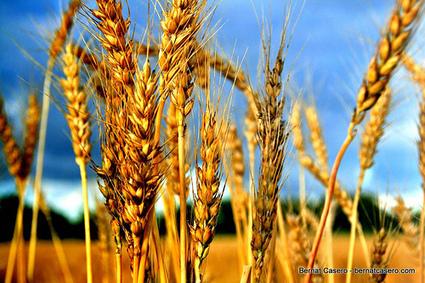 Du blé aux pâtes: la solution italienne à la pauvreté en Ethiopie | Changer la société pour éliminer la pauvreté | Scoop.it