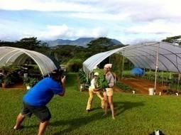 How We Choose Restaurants | Kauai The Garden Isle | Scoop.it