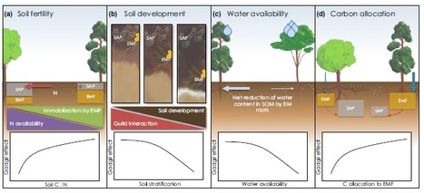 Revisiting the 'Gadgil effect': do interguild fungal interactions control carbon cycling in forest soils? -  New Phytologist   Confidences Canopéennes   Scoop.it