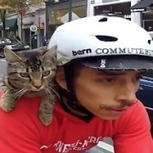 All Hail Cat Bike Guy, King Of The Hipsters | With Leather | Cats Everywhere | Scoop.it
