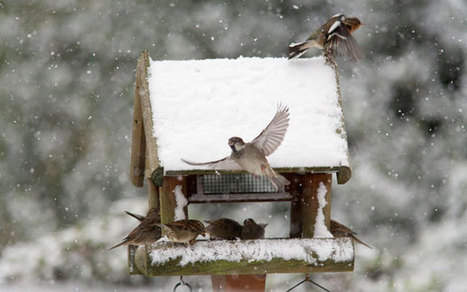 How to grow your own bird food - Telegraph | Sustainable Living | Scoop.it