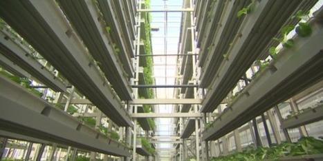Lavilledemain : La ferme verticale   Charlotte Cprn   Scoop.it