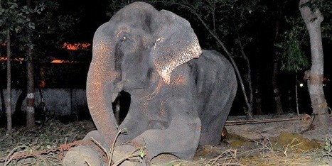 Elephant Cries After He Is Rescued Following 50 Years Of Abuse | This Gives Me Hope | Scoop.it