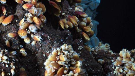 Xenius   ARTE   Ressources minérales sous-marines   Scoop.it