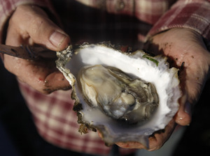How Climate Change Is Changing The Oyster Business : NPR   On the Plate   Scoop.it