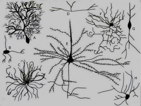 Y a-t-il vraiment 100 milliards de neurones dans notre cerveau ... | Le meilleur de vous | Scoop.it
