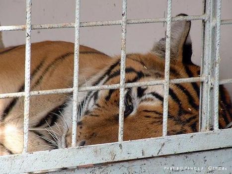 Les Pays-Bas interdisent les animaux sauvages dans les cirques   Vegactu - végétarien, végétalien et végan   Scoop.it