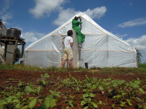 Penn State students' affordable greenhouse effort helping African ... | Agricultural & Horticultural Industry News | Scoop.it