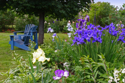 Flowers and Plants - GardenTV   Annie Haven   Haven Brand   Scoop.it