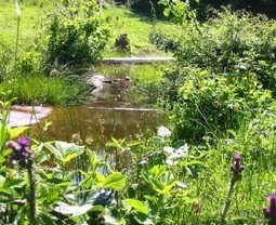 Gestion de l'eau au jardin : un bassin sans pompe ni filtre, c'est possible ! Plantez ! » BlogNature | Potager & Jardin | Scoop.it