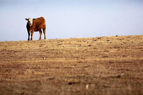 Markets Gird for Return of El Niño - Wall Street Journal | FinaceOnEarth | Scoop.it