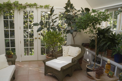 Make your Apartment Greener with Indoor Plants | Real Estate | Scoop.it