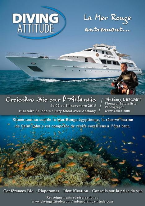Croisière Bio 2015 : Mer Rouge, un peu plus au sud ! - Le Blog de la Plongée Bio | Biologie marine | Scoop.it