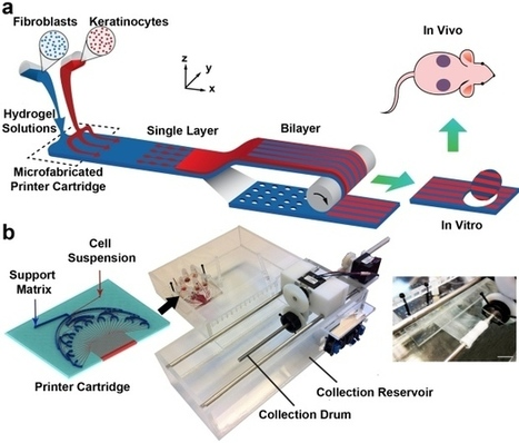 Skin 3D Bioprinter Wins Award - 3D Printing Industry | Smart devices and technology solutions | Scoop.it