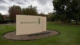 Monsanto to spend $100 million to develop corn hybrids in Canada | MAIZE | Scoop.it