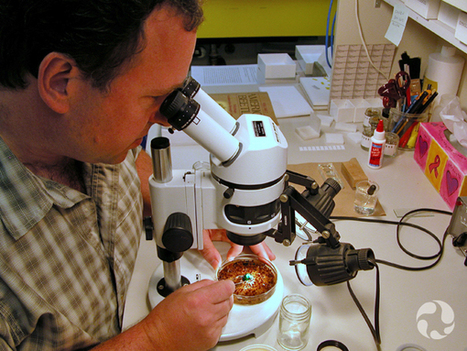 Beetles and Ants: Strange Bedfellows? | InsectNews | Scoop.it