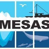MESAS (Marine Ecosystem Sustainability in the Arctic and Subarctic) | MESAS - Marine Ecosystem Sustainability in the Arctic and Subarctic | Scoop.it