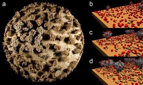 Des chercheurs toulousains ont compris comment les fourmis forment leur nid | EntomoScience | Scoop.it